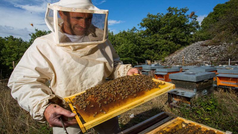 Золоті гори — це про бджільництво