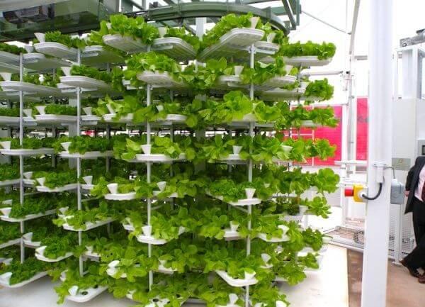 Вертикальні ферми