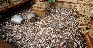 Вилов риби у водоймах України збільшився