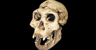 Вчені знайшли новий невідомий вид стародавньої людини