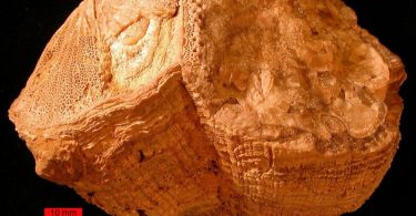 70 мільйонів років тому земна доба була коротшою на півгодини