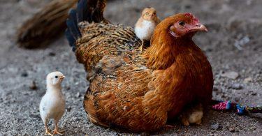 Не коронавірусом єдиним - виявлено спалах «пташиного грипу»