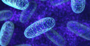 Знайдена нова причина біологічного старіння