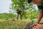 Садити дерева