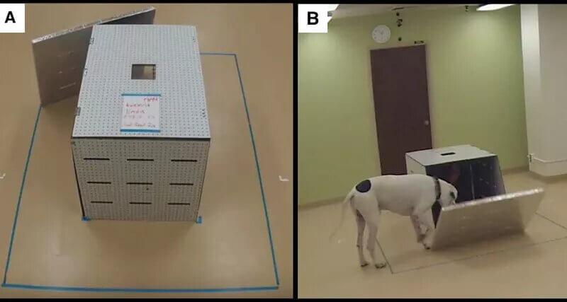 Експеримент з собаками
