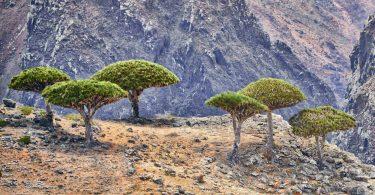 Біологи довели, що рослини допомагають один одному у важких умовах