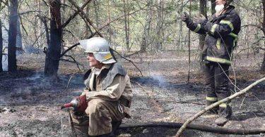 Пожежі на Житомирщині та в зоні ЧАЕС локалізовані