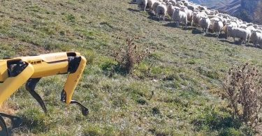 Робособаку Spot навчили пасти овець [ВІДЕО]