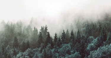 Похолодання і кисень: вчені сказали, що підштовхнуло життя на Землі