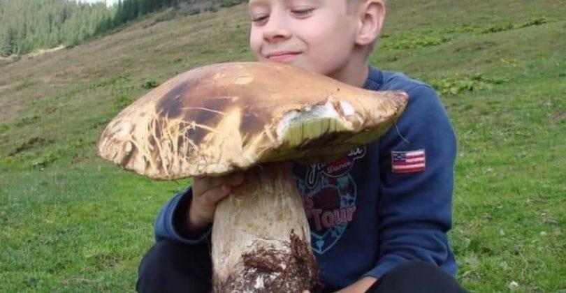 гриб-гігант