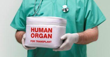 Розроблено нову методику вирощування людських органів