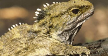 Вчені встановили найближчого родича динозаврів на сьогодні