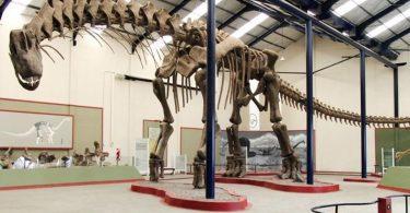 З'ясувалося, чому динозаври досягали величезних розмірів