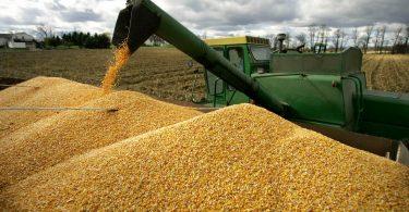 В Україні очікують рекордний урожай
