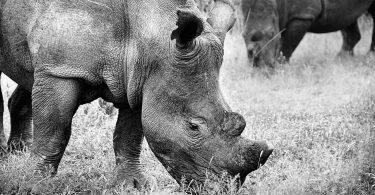 Підраховано, скільки видів тварин зникне до 2100 року