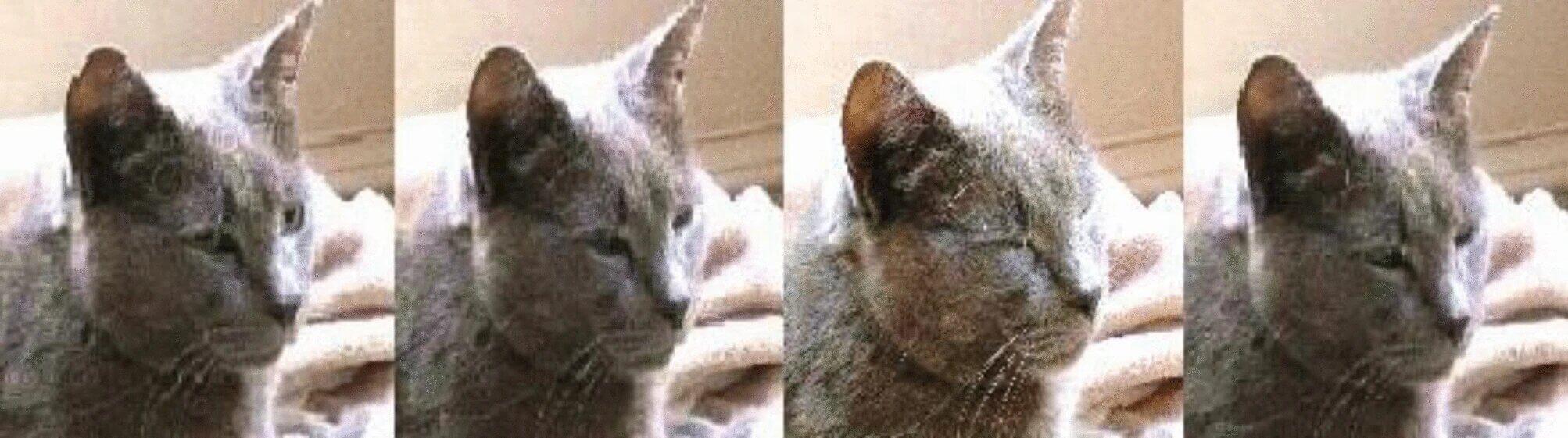 Реакція кота на моргання