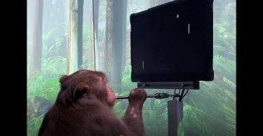 Мавпа Ілона Маска силою думки зіграла в Pong [ВІДЕО]