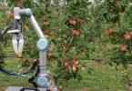 Збирач яблук