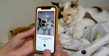 Додаток розповість про настрій і стан кішки