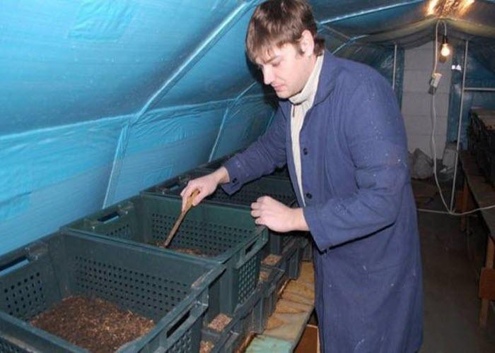 Бизнес разведение червей в домашних условиях