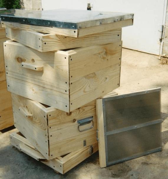 Бджільництво як бізнес: чи вигідно цим займатися, детальний план розвитку пасіки, відгуки підприємців та інше